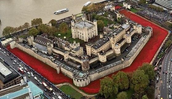Tower of London Sea of Poppies