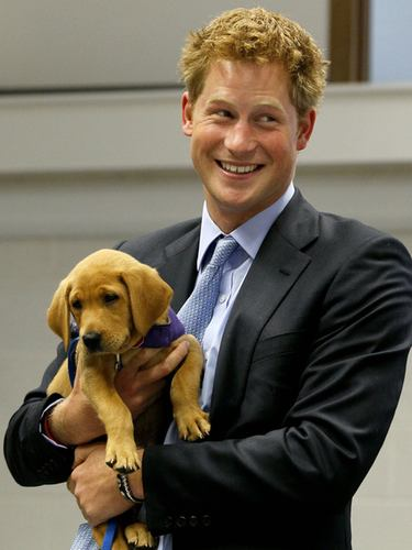 Prince Harry holding a puppy