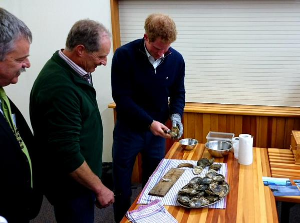 Prince Harry shucking oysters