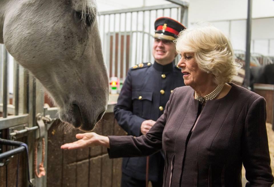 Camilla meets horses2