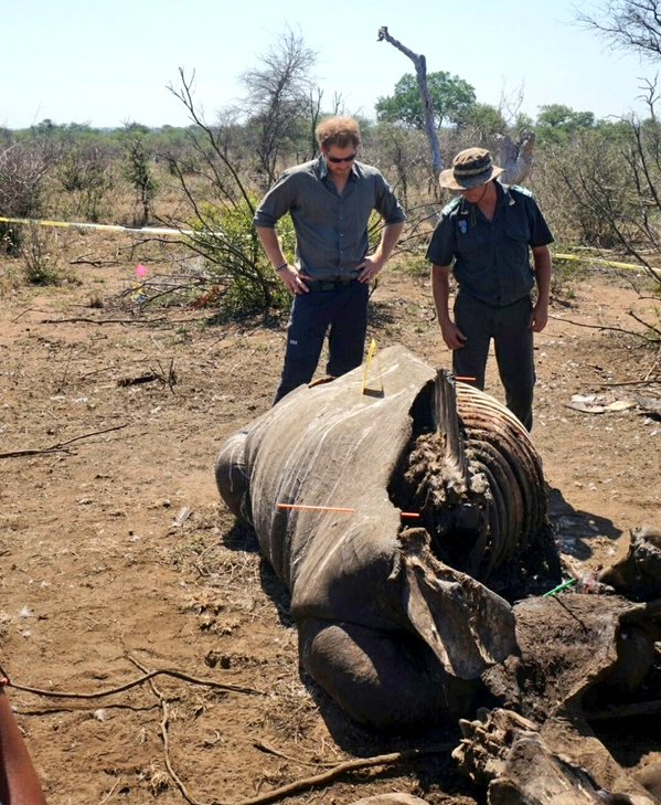 Harry stands over rhino