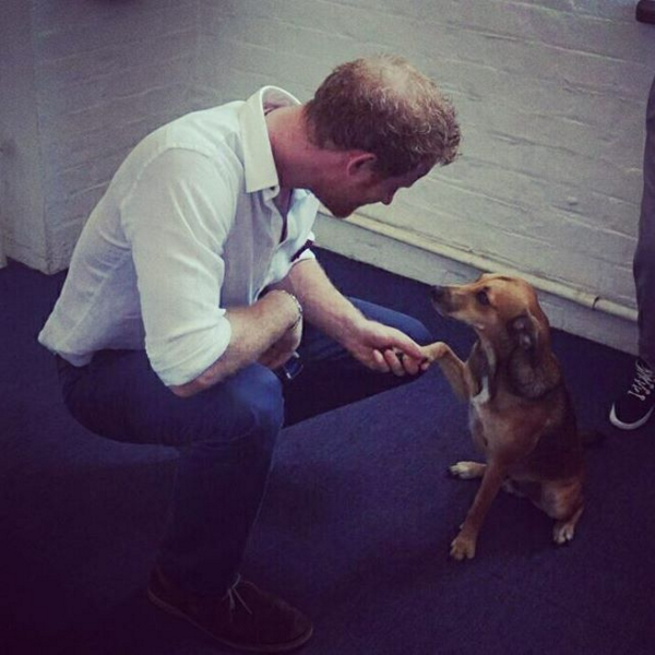 Prince Harry meets Jasper the dog at Surfers Not Street Children