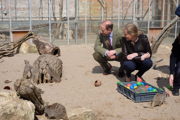 Wessex family feeding meerkats 3