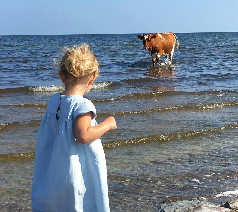 Princess Leonore and cow in Oland