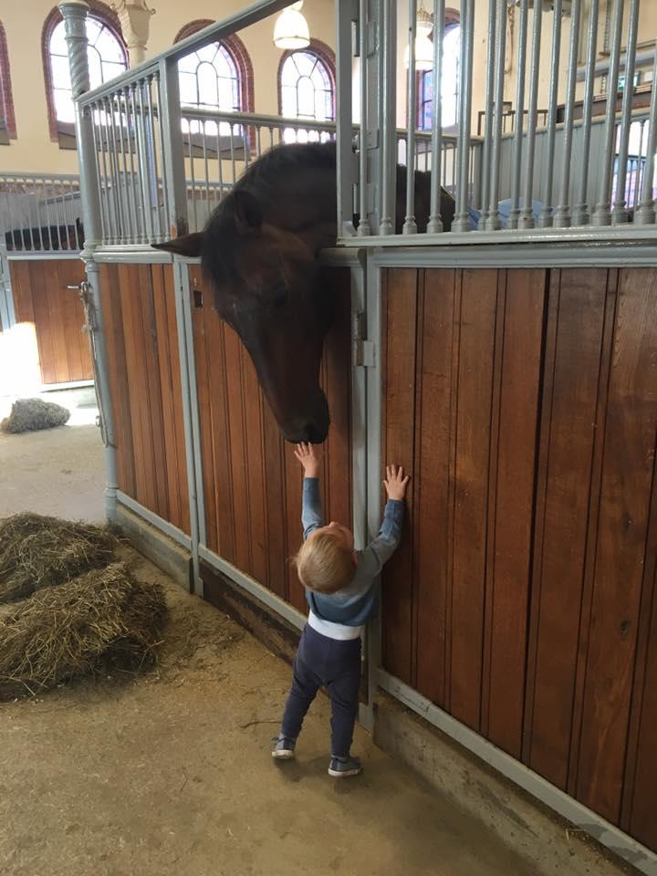 nicolas-meets-a-horse