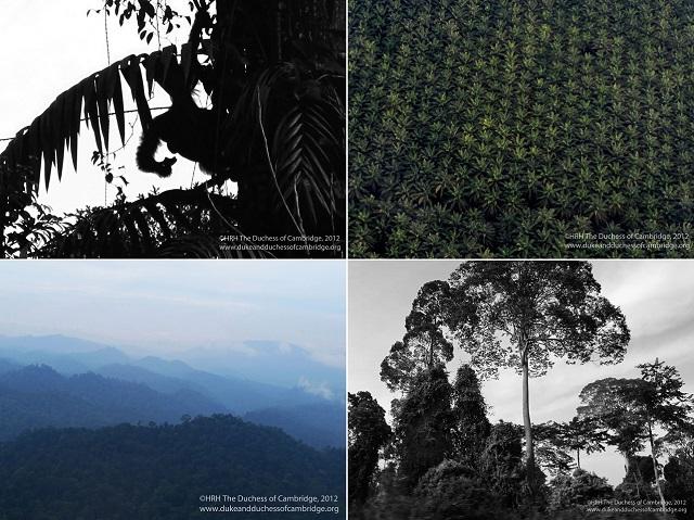 kates-borneo-photos-collage-s